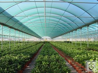 TAG60B-plastic-tunnel-for-production-of-plants-and-vegetables-GOME-Hi-Tech-Resource-5