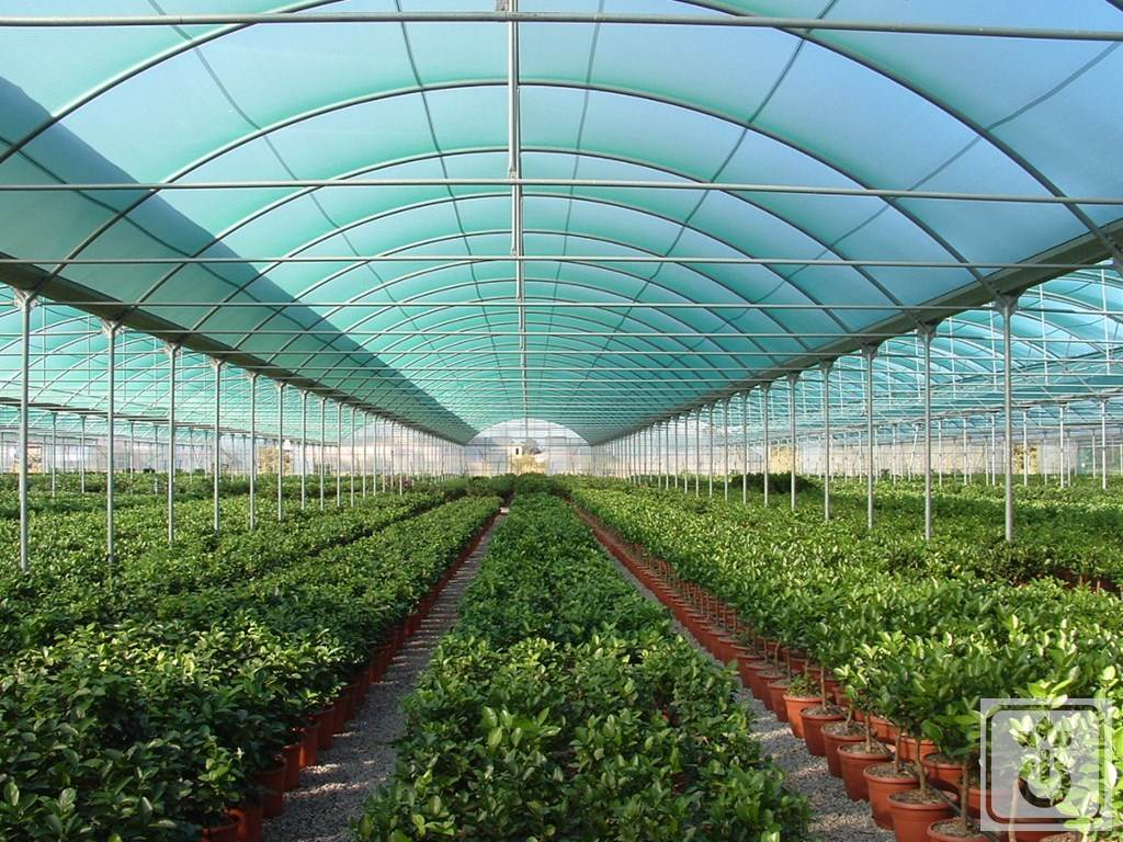 Gome HTR TAG60B-plastic-tunnel-for-production-of-plants-and-vegetables-GOME-Hi-Tech-Resource-5
