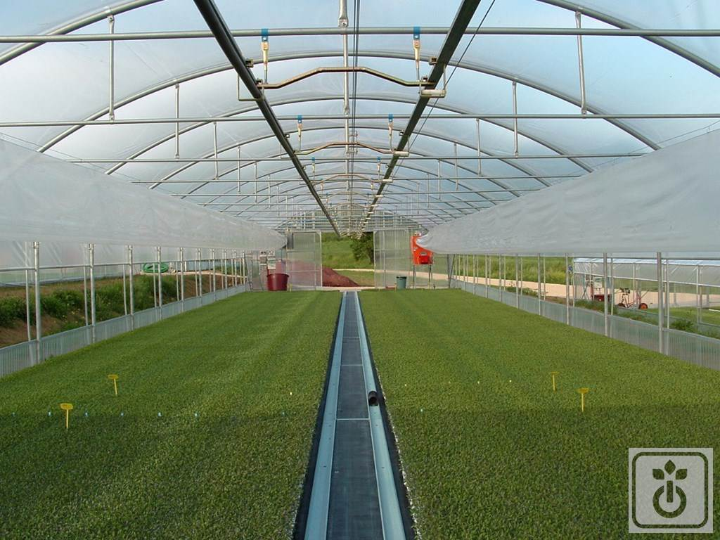 Gome HTR TAG60B-plastic-tunnel-for-production-of-plants-and-vegetables-GOME-Hi-Tech-Resource-4