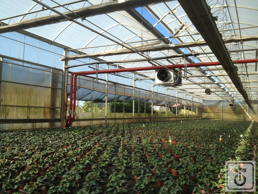 Gome HTR Biomass-plant-for-heating-greenhouses-GOME-Hi-Tech-Resource-4